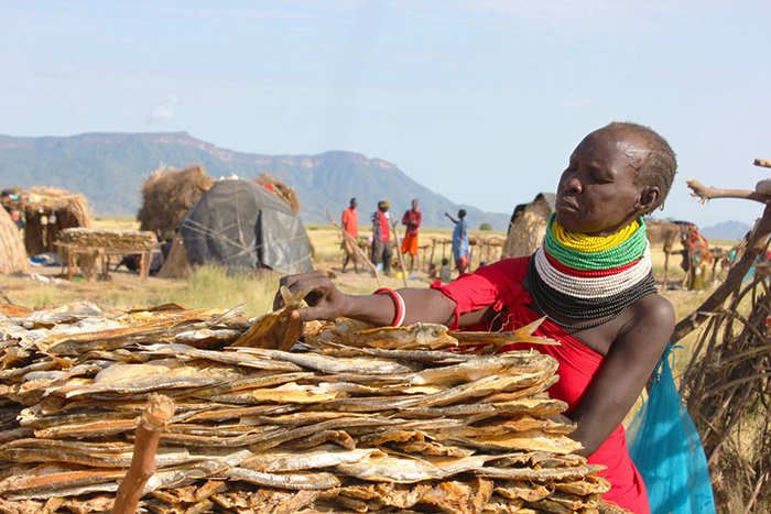 Atok Areng, a fish trader, dries her fish at Old Ghana village, along the shores of Lake Turkana. Photo by Denis Koech.