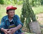 U Kan Htein on his sesame farm in Kayah State, Myanmar. (Photo: Mercy Corps)