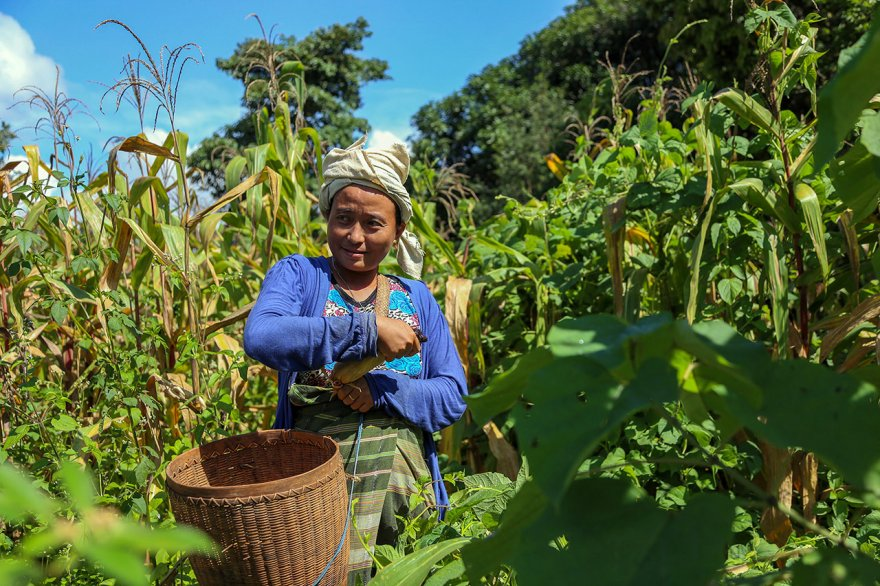 ACE: Request for applications for private sector collaboration to strengthen agricultural value chains