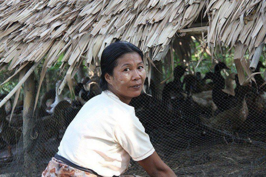 Hatching hope: ducks and microfinance in Myanmar