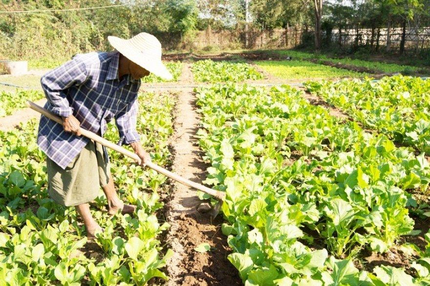 For Myanmar's rural poor, integrated development plants seeds of change