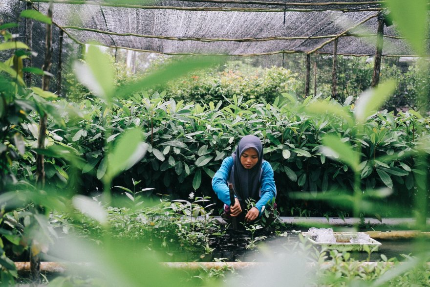 Celebrating Southeast Asias forests and fields -- everyday
