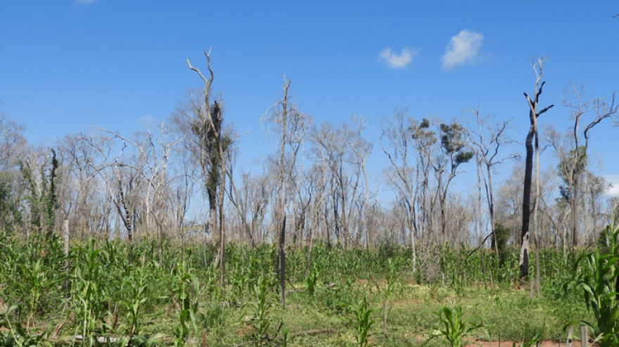 Environmental justice and advocacy to save Madagascar's largest dry forest