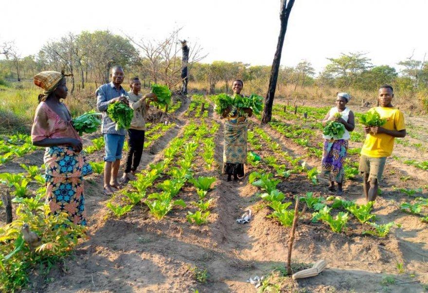 A crop field that Batwa and Bantu farmers cultivate together. Credit: TCMR