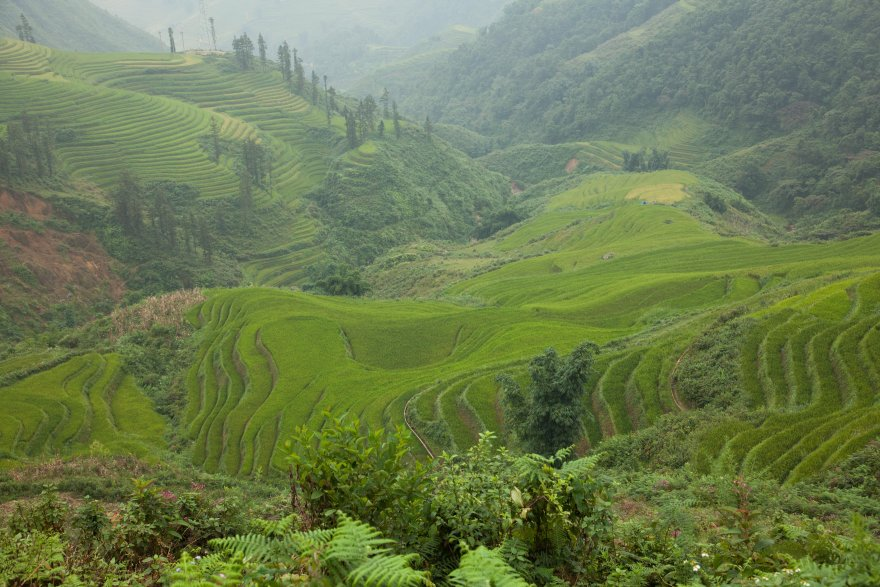 Forested hills and rice terraces depend on watershed health in the Mekong region. Credit: David Bonnardeaux/Pact