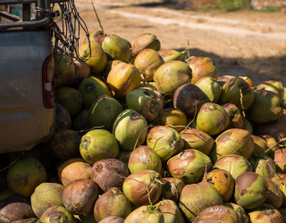 Private sector launches coconut industry's first sustainability charter
